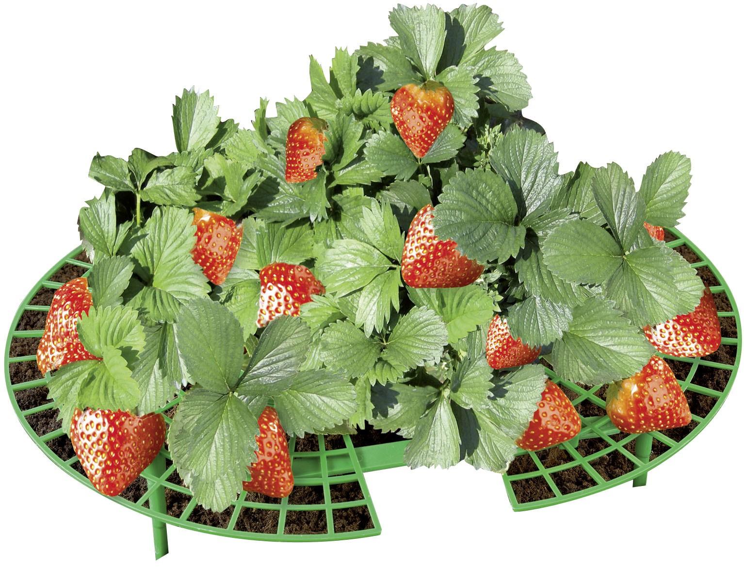 Erdbeer-Reifer, 15er Set
