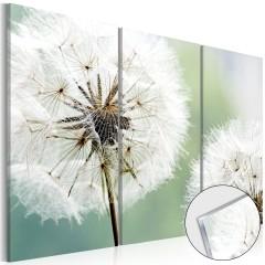 Artgeist Acrylglasbild - Fluffy Dandelions [Glass]
