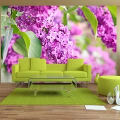 Artgeist Fototapete - Lilac flowers