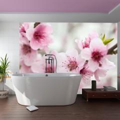Artgeist Fototapete - Blühende Kirschblüte (rosa Blümchen)