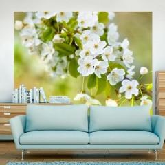 Artgeist Fototapete - Zweig mit weißen Kirschblüten