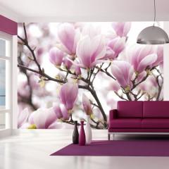 Artgeist Fototapete - Blühender Magnolienzweig