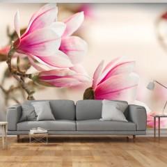 Artgeist Fototapete - Branch of magnolia tree