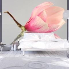 Artgeist Fototapete - Einsame Magnolienblüte