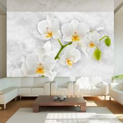 Artgeist Fototapete - Lyrical orchid - White