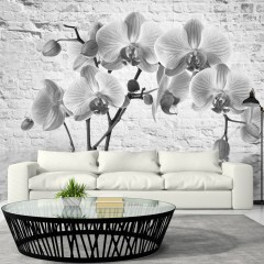 Artgeist Fototapete - Orchid in Shades of Gray