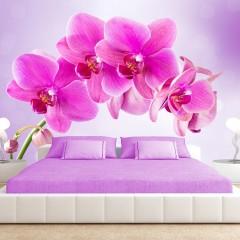 Basera® Fototapete Orchideenmotiv 10110906-120, Vliestapete