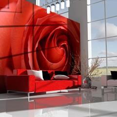 Artgeist Fototapete - Awakening rose