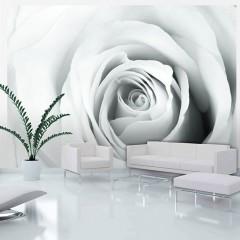 Artgeist Fototapete - Rose charade