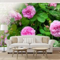 Artgeist Fototapete - Summer garden