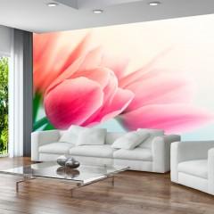 Artgeist Fototapete - Frühling und Tulpen
