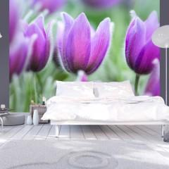 Artgeist Fototapete - Lila Tulpen im Frühling