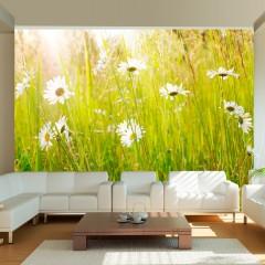 Artgeist Fototapete - Frühlingsweide mit Gänseblümchen