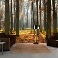 Artgeist Fototapete - Autumn trees