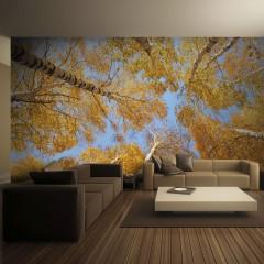Artgeist Fototapete - Autumnal treetops