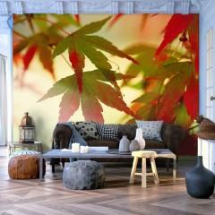 Artgeist Fototapete - Bunte Blätter im Oktober