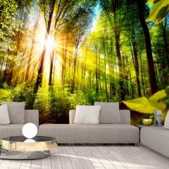 Artgeist Fototapete - Forest Hideout