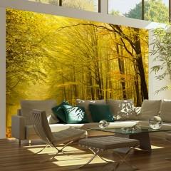 Artgeist Fototapete - Hübsche Herbstallee