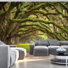 Artgeist Fototapete - Tree embrace
