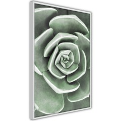 Poster - Beautiful Succulent [Poster]