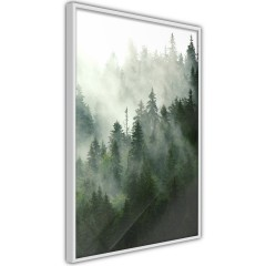 Poster - Coniferous Forest [Poster]