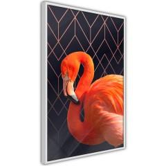 Poster - Flamingo Solo [Poster]