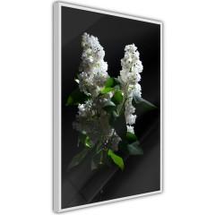Poster - Lilacs at Night [Poster]