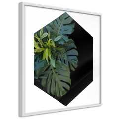 Poster - Plant Hexagon (Square) [Poster]