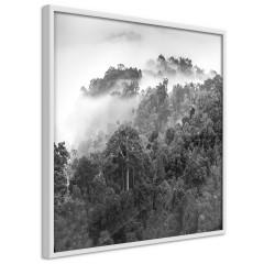 Poster - Rainforest [Poster]