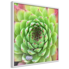 Poster - Succulent (Square) [Poster]