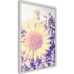 Poster - Sunflower [Poster]