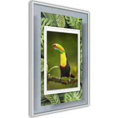 Poster - Toucan [Poster]