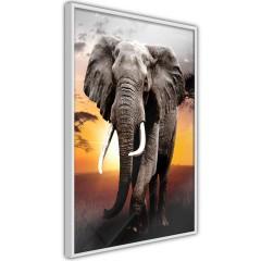 Poster - Warm Savanna [Poster]