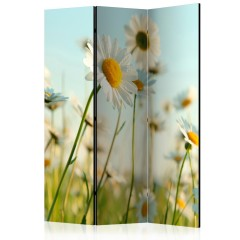 Artgeist 3-teiliges Paravent - Daisies - spring meadow [Room Dividers]