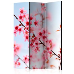 Artgeist 3-teiliges Paravent - Symbol of Japan - sakura flowers [Room Dividers]