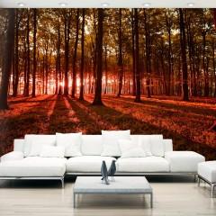 Basera® Selbstklebende Fototapete Waldmotiv c-B-0127-a-d, mit UV-Schutz