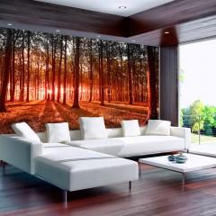 Basera® Selbstklebende Fototapete Waldmotiv c-B-0027-a-d, mit UV-Schutz