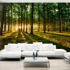 Basera® Selbstklebende Fototapete Waldmotiv c-B-0127-a-b, mit UV-Schutz