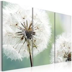 Artgeist Wandbild - Flauschige Pusteblumen