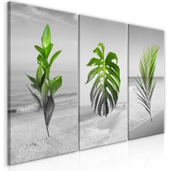 Artgeist Wandbild - Plants (Collection)