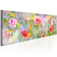 Artgeist Wandbild - Rainbow of Morning Poppies