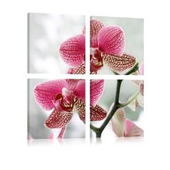 Artgeist Wandbild - Ausgefallene Orchidee