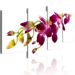 Artgeist Wandbild - Der Glanz der Orchidee