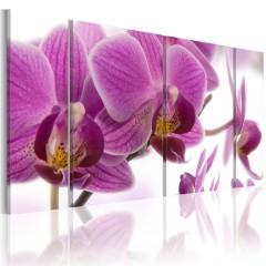Artgeist Wandbild - Marvelous orchid