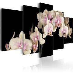 Artgeist Wandbild - Orchidee am kontrastierenden Hintergrund