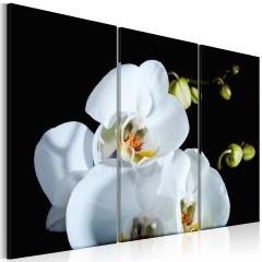 Artgeist Wandbild - Schneeweiße Orchidee
