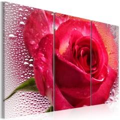 Artgeist Wandbild - Lady Rose - triptych