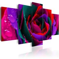 Artgeist Wandbild - Multicoloured rose