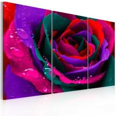 Artgeist Wandbild - Regenbogenfarbene Rose