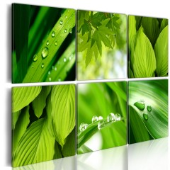 Artgeist Wandbild - Saftige grüne Blätter